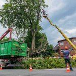 tree removal irvine