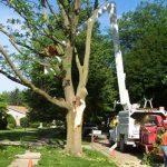 irvine tree trimming