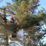 tree-trimming-services-irvine